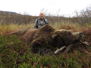 Alaska Brown Bear Hunt - Peninsula 6