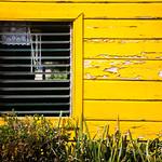 Big Yellow thumbnail