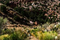 Zion 2018-080_ILCE-7RM3-85 mm-180529_180529-ILCE-7RM3-85 mm-161820__STA5255 (Staufhammer) Tags: sony sonya7riii a7riii sonyalpha sony1635mmf28gm sony1635mm sonygm sony85mmf18 zion nationalparks nationalpark zionnationalpark grandcanyon landscape alphashooters travel valley fire state park valleyoffire valleyoffirestatepark