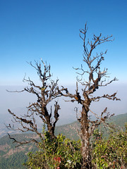 mountain,  doi inthanon national park, chiangmai , Thailand (www.icon0.com) Tags: inthanon outdoor hill sunlight fog tree thailand chiangmai foggy natural national green cloud autumn travel view sunrise valley scenery summer light morning asia season wood range misty forest high color blue mountain mist beauty sunset sky scenic tourism scene beautiful background path fresh peak nature idyllic environment tranquil landscape