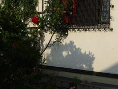 Neuer Morgen 005 (bratispixl) Tags: fotosafari oberbayern germany bratispixl tele lichtwechsel schärfentiefe fokussierung bergwelt spot outdoor indoor architektur landschaft grat hügel wasser sonnenfotografie see flus tiere nature nigth day spuren blumen wolken video