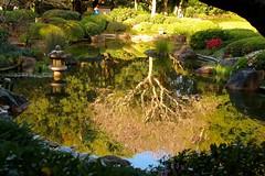 The Inverted Tree (adamsgc1) Tags: reflection tree invertedtree japanesegardens toowong botanicalgardens brisbane queensland australia lantern flowers