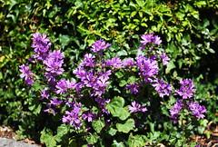 DSC_0411 (PeaTJay) Tags: nikond750 sigma reading lowerearley berkshire macro micro closeups gardens outdoors nature flora fauna plants flowers