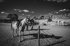 chained unhappy horses cappadocia (tuncay demirbilek) Tags: horse cappadocia kapadokya peri bacasi nevsehir nevşehir nature shadow shade turkey türkiye turkiye summer sky skyline