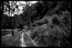Königsteig (shortscale) Tags: feldweg schwarz weiss schwarzweiss blackandwhite black white buw monochrome noiretblanc
