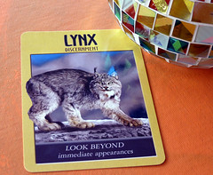 Lynx (Rain Love AMR) Tags: lynx cat feral large orange globe mosaic tile reflection oracle tarot fortune discernment spiritual card cards