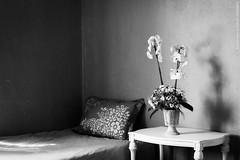…..❤ (samsara ilknur donmez) Tags: gift phalaenopsis orchid samsarailknurdonmez