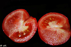 all you need for a summer salad (Els Herten) Tags: tomato food vegetable red macro