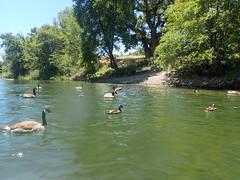 P6300422 (MFTMON) Tags: dale mftmon dalemorton riverrafting americanriver sacramento california river rafting nature