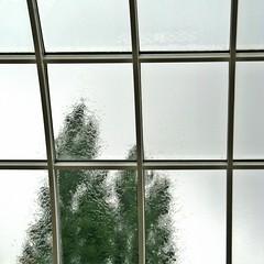 Jeune pousse (Robert Saucier) Tags: belgique belgium gand gent musée museum fenêtre vitre window glass cristal arbres trees grille grid vert green pluie rain raindrops gouttes ciel sky flou blur img8945