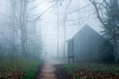 """It was as if in a scene from the song """"Forest of darkness"""". (Yuki (8-ballmabelleamie)) Tags: picturedrocksnationallakeshore logslide mist fog shed forest"""
