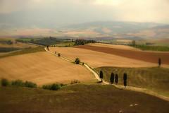 senza titolo. (Enzo Ghignoni) Tags: case grano frumento alberi cipressi campi