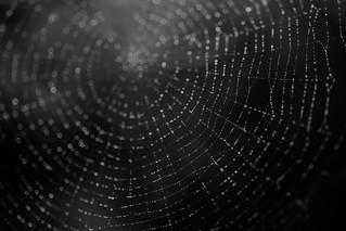 The Dark Web...