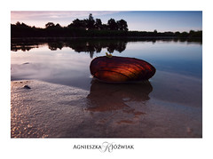 Muszla (smoothna) Tags: sunset shell wartalandscapepark river nadwarciańskiparkkrajobrazowy water smoothna d90