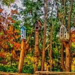 Kleinburg Onatrio- Canada - Home Made Birdhouse- Feeders - HDR thumbnail
