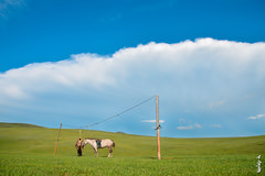 Waiting... (N.Batkhurel) Tags: animals horse season summer sky clouds övörkhangai mongolia landscape ngc nikon nikondf 24120mm