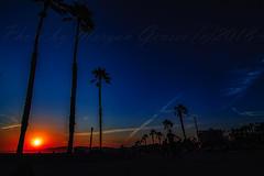 19 (morgan@morgangenser.com) Tags: sunset red orangeyellow blue pretty cloud silhouette sun evening dusk palmtrees bikepath sand beach santamonica pacificpalisades beautiful black dark cement amazing gorgeous inawe ca photobymorgangenser