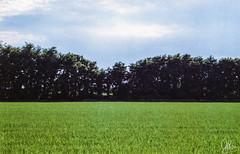 (Gi_shi) Tags: nikon iamnikon nikonfm2 nikonitalia film pellicola analogica analogic risie landscape panorama ricefield