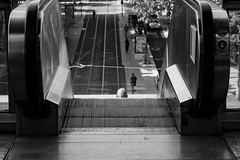 Mon chauve | My bald (Caroline Vincelet) Tags: france rhône lyon auvergnerhônealpes europe 69 noiretblanc streetphotography blackandwhite chauve bald minimalisme minimalism perspective escalator