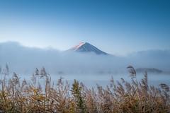 Foggy Fuji (Gift of Light) Tags: mountain mount mountfuji fuji fujisan volcano peak fog mist lake kawaguchiko kawaguchi grass autumn monring day light sky nature landscape sonyalpha sony alpha a9 sonya9 sonyfe1635mmf28gm fe 1635mm 163528 281635 f28 gm feisol feisolct3442tournamenttripods ct3442