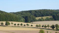 Kalletal - Lüdenhausen (Jörg Schulte) Tags: kalletal bäume formation felder