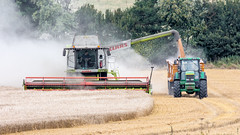 harvest 1 (Jez22) Tags: harvest harvesting kent england combine claas lexion actonfarm grain crop cereal dust dusty farm farming agriculture agricultural machine summer dry weather arable field straw ripe wheat johndeere tractor trailer photo copyright jeremysage