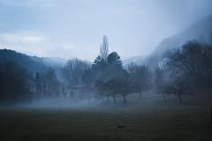 P1000230 (Les mondes engloutis) Tags: suisse switzerland schweiz romandie waadt vaud romainmôtier paysage landscape nature brouillard mist