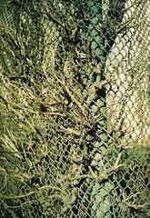 offside2018. l'viv. (Yaroslav F.) Tags: rabitz plant tree sun light shadow 35mm panasonic c625 af lviv yaroslav futymskyi film photography street branches 100 gold kodak