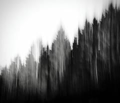 flowing nature (#ca) Tags: olympus1240mmf28 em10markii mft noiretblanc blur forrest