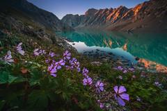 Ala-Kul Lake Kyrgyzstan (albert dros) Tags: kyrgyzstan lake mountains karakol travel flowers alpenglow sunset sunrise albertdros bishkek
