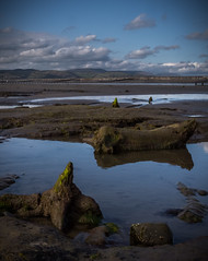 Prehistoric submerged forest (G. Warrink) Tags: wales visitwales cymru findyourepic lovewales beautifulwales discoverwales prehistoric remains forest trunks bronzeage 5500yearsold borth ynyslas sea shore coast sand beach