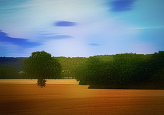 Gold field ... (Julie Greg) Tags: texture field nature trees colours sky clouds tree canon