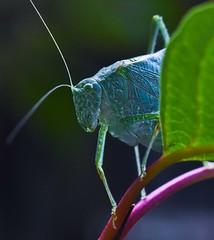 Backyard macro (jepan70) Tags: summer closeups nikon nature bugs macro