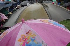 umbrellas 2 c