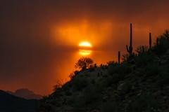 (MeaghaHertz) Tags: tucson gates pass saguaro sunset arizona a550 sony mountain park monsoon
