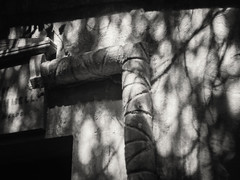 20180518-0141-Edit (www.cjo.info) Tags: 19thcentury 19thcenturyneogothic bw egyptianavenue england europe europeanunion highgate highgatecemetery highgatecemeterywest london m43 magnificent7 magnificentseven magnificentsevengardencemeteries microfourthirds nikcollection olympus olympuspenfgzuikoautos40mmf14 olympuspenf penfmount silverefexpro silverefexpro2 unitedkingdom victoriangothic westerneurope architecture blackwhite blackandwhite carving cemetery classiclens death decay digital flora gothic gothicrevival gravegraveyard legacylens manualfocus monochrome overgrown plant shadow stone stonework tomb tree victorian