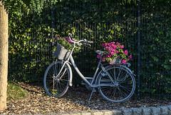 Ein Fahrrad (Tatjana_2010) Tags: sommer sonne bäume blumen fahrrad