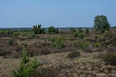 Kootwijkerzand, before the big drought (Nelleke C) Tags: 2018 radiokootwijk gelderland heathland heide landscape landschap nederland netherlands veluwe