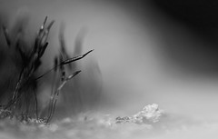 Misty Mossland (setoboonhong) Tags: nature outdoor fernery moss ant rock sunlight close up monochrome bw mossland misty mood hmbt bokeh blur ngc npc