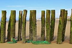 Les pieux de Wissant (montane.stephane) Tags: pieux mer plage nature paysage côtedopale littoral france pasdecalais wissant