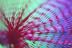 Inside the onion bag (DeniseJC) Tags: macromondays mesh macro onionbag pink green purple hmm