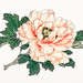Pink rose by Kōno Bairei (1844-1895). Digitally enhanced from our own original 1913 edition of Barei Gakan.