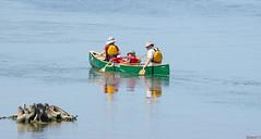 Randonnée en canot, Île Petrie, Ottawa, Canada - 7532 (rivai56) Tags: ottawa ontario canada ca randonnéeencanot îlepetrie 7532 randonnée en canot canoe trip activité familiale sport eau water