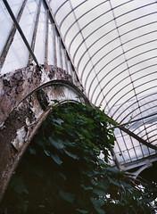 Greenhouse (sam.naylor) Tags: kew gardens london uk garden park royal botanical fuji portra vc medium format film rangefinder 645 gs645s