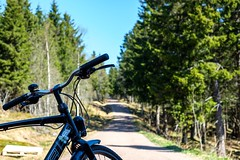 Viking Biking in Oslo (Wouter de Bruijn) Tags: fujifilm xt2 fujinonxf35mmf14r bike bicycle biking cycling offroad bikepath forest marka nordmarka oslo norway norge rental nature landscape hybrid merida outdoor trees bokeh depthoffield