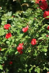 IMG_8329 (martaadves) Tags: people girls nature crimea sevastopol green flowers