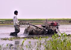 Farmer (Suman Kalyan Biswas) Tags: portraitoutdoorpowertiller farmer indianfarmer india bangla beautifulbengal incredibleindia cultivation plantation agriculture field ruralindia ruralbengal village ruralphoto people purbasthali