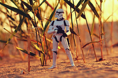 S C A R I F (Leo Goubine) Tags: starwars starwarssaga stormtrooper sand leafs beach toyphotography toys actionfigure actionfigures blackseries toyphotographer toysthroughthelens trooper troops