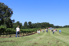 IMG_9092 (UGA CAES/Extension) Tags: vineyard wine winery stonepilevineyard viticulture viticultureteam northgeorgia winecountry ugacooperativeextension uga extension grapes ugaextension cainhickey