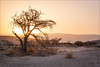 Sunrise at Arava (tzim76) Tags: landschaft landscape sonnenaufgang sunrise baum tree sand wüste trocken outdoor sonne sun steine stones dry dusty nature israel arava wadi